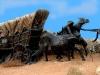 wagon1